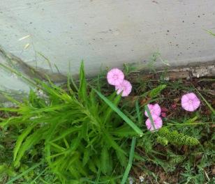 Blumen am Wegesrand, die Zweite