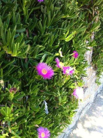 irgendwie sehen die Blumen hier schöner aus
