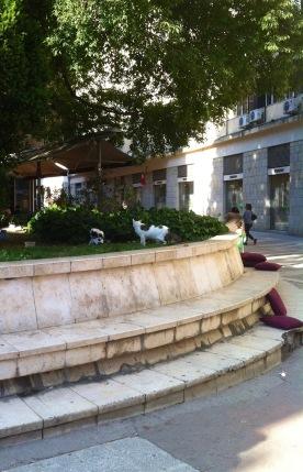 am Platz Ujevićeva poljana werden die Katzenallabendlich gefüttert, hier liegt auch das LUKA und der Konzum