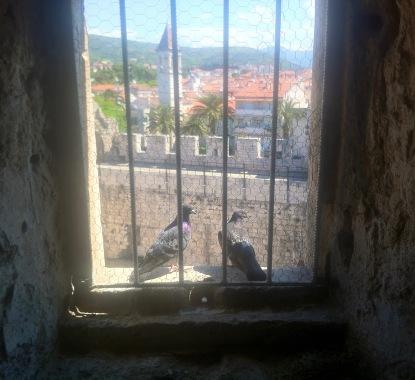überall waren Tauben, balzten und nisteten