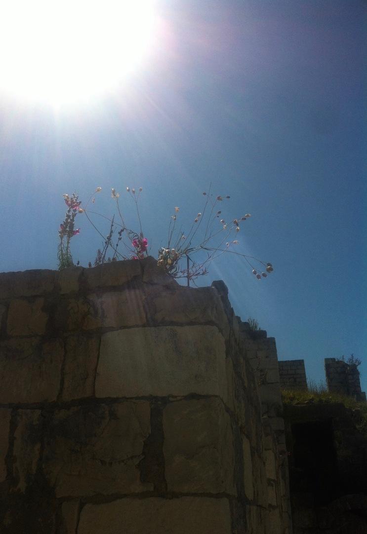 daran konnte ich mich nicht satt sehen: Sonne, Blumen, altes Gemäuer