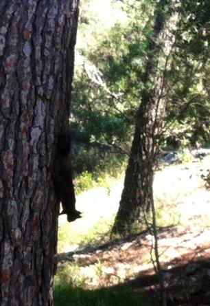 zwei Eichhörnchen spielten Fangen