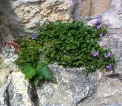und noch mehr Blumen ...