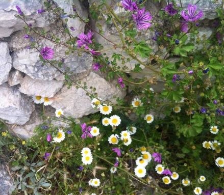 schon wieder so viele entzückende Blumen