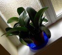 .Kennt jemand den Namen dieser Pflanze? Haben wir irgendwie adoptiert.