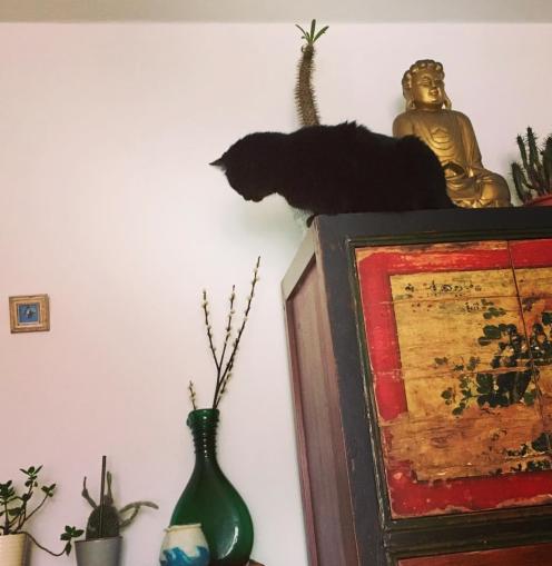 """8. Januar """"Kätzchen unter sich!"""""""