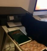 """1. Februar """"Für die Katze finden die mysterien auf dem Schreibtisch statt!"""""""